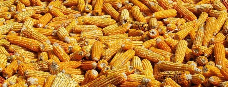 GGO, ongezond, gevaarlijk