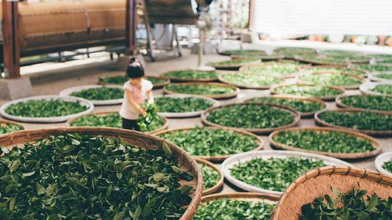 Groene thee soorten