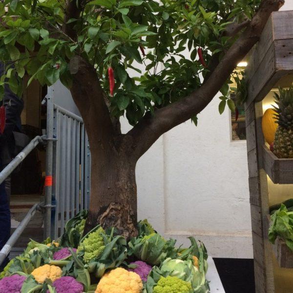 Groenten en planten