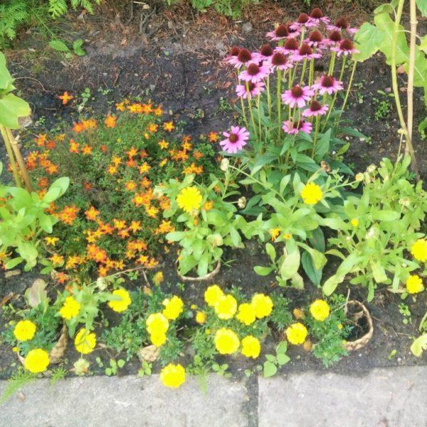 Ecologische tips voor tuinieren zoals in een bloementuin