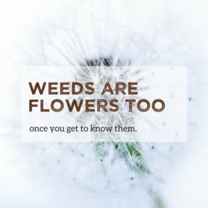 Quote onkruid zijn ook bloemen, zoals de paardenbloem