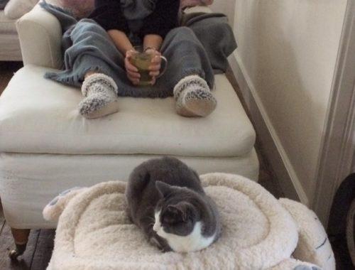 gezellig op de witte bank met en kop thee en een grijs met witte kat in een mandje