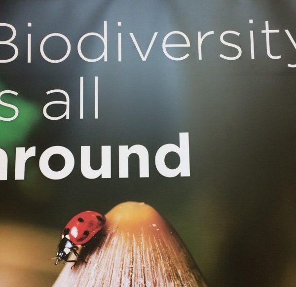 Biodiversiteit is overal ook in dit kleine lieveheersbeestje